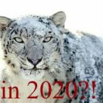 Can you still use Snow Leopard in 2020?